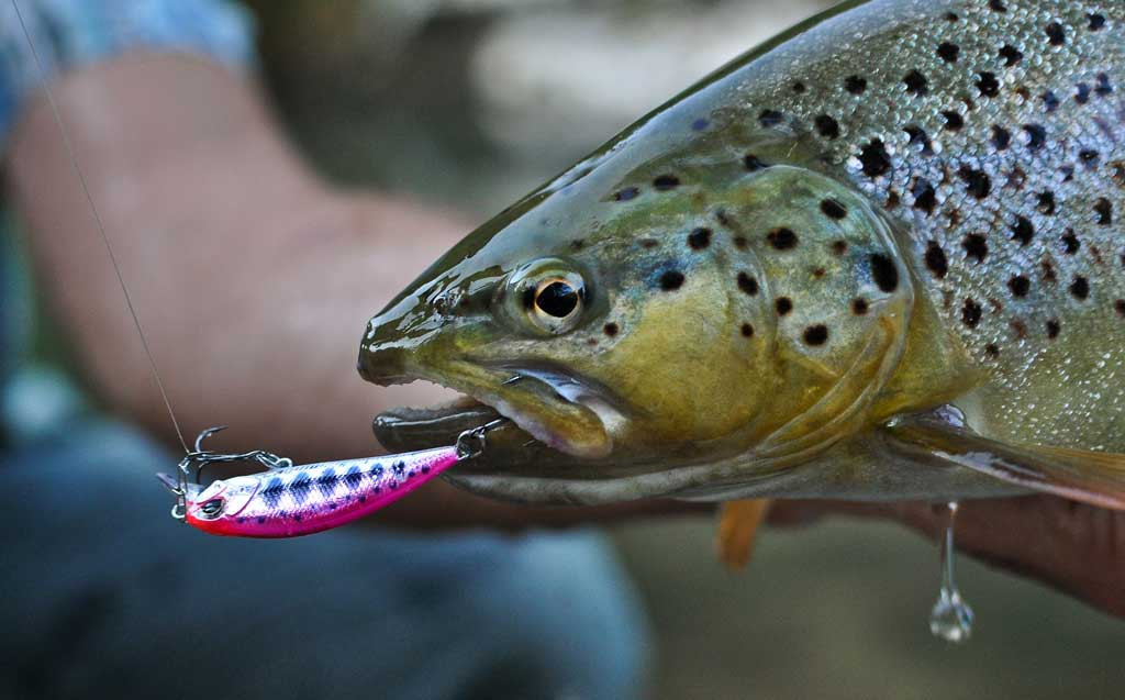 Pescuit la Munte - Secrete La Pescuit la Păstrăv